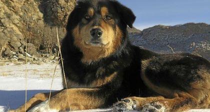 REPLAY - L'Odyssée des chiens (France 5) : Le meilleur ami de l'homme