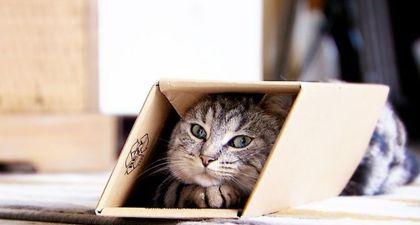 REPLAY - La vie secrète des chats (TF1) : les chats sous surveillance